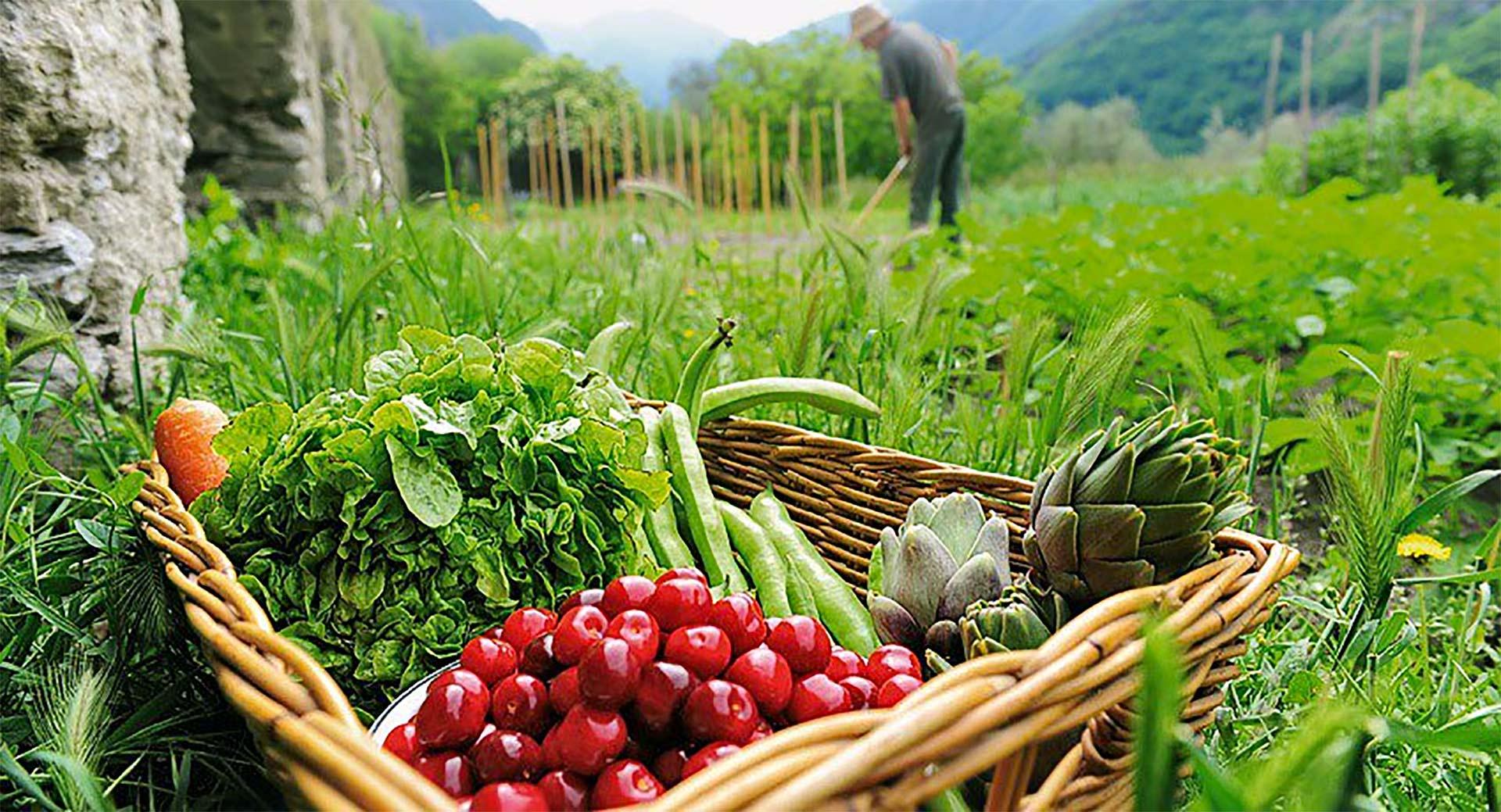 Pastoralsj vivir ecosistema huerto for Que plantas se siembran en un huerto
